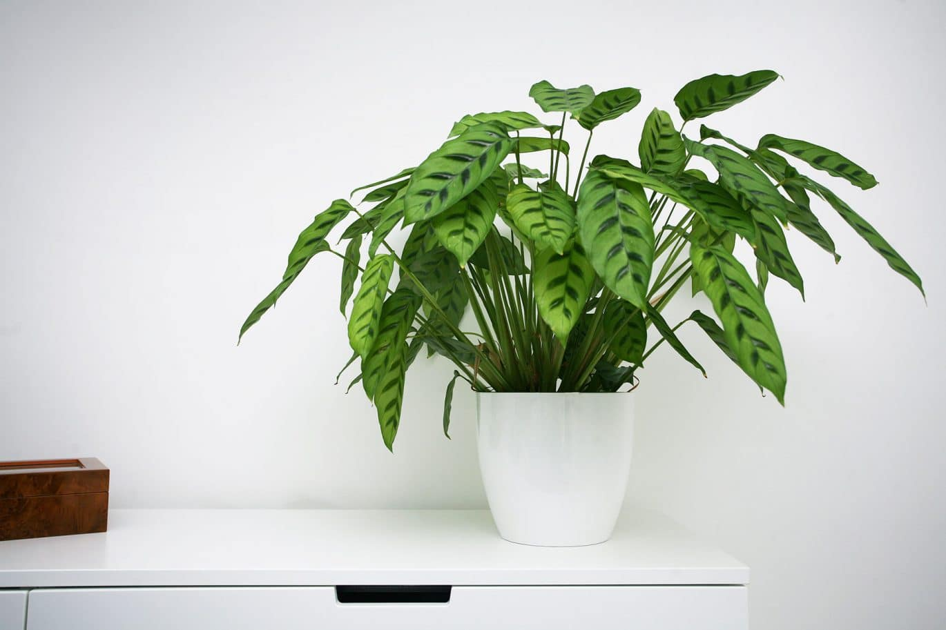 Cleaning customers white dresser with bright green houseplant on top
